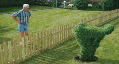 Дачный забор между соседями.
